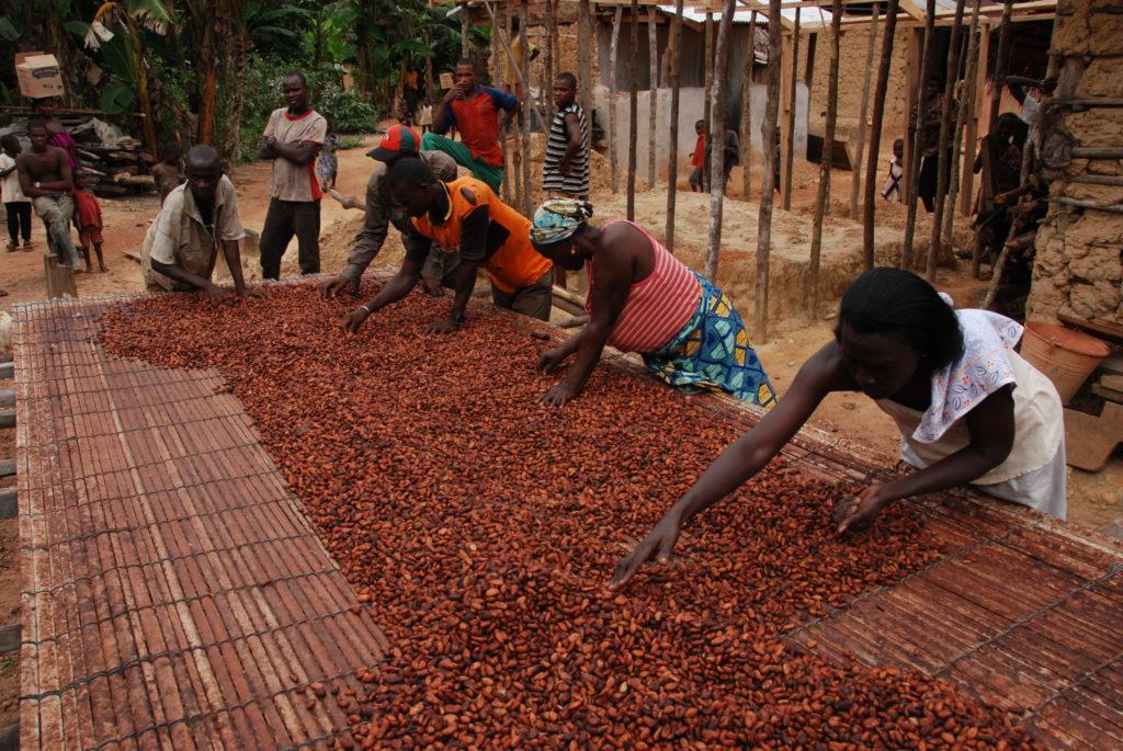 обжаривание какао-бобов